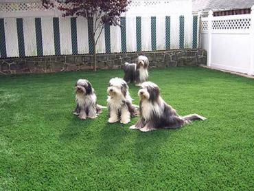 Artificial Grass Photos: Artificial Grass Installation Caruthers, California Landscape Rock, Backyard Makeover