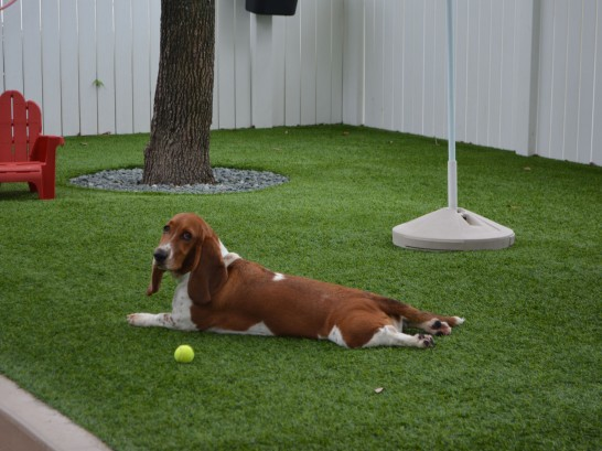 Artificial Grass Photos: Fake Turf Sea Ranch, California Drainage,  Dog Kennels