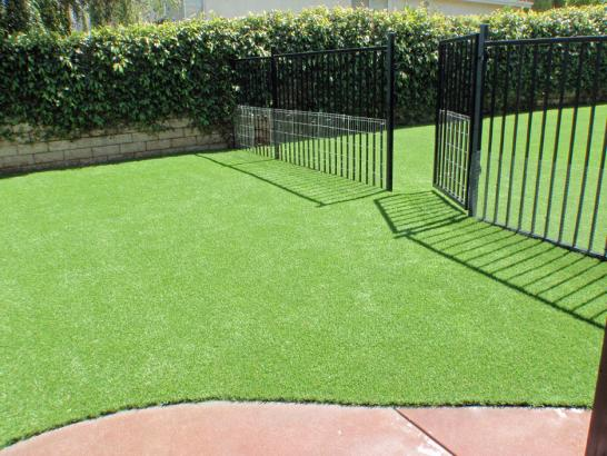 Artificial Grass Photos: Grass Installation Laguna, California Cat Grass, Front Yard Landscape Ideas