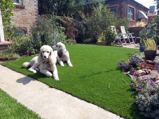 Artificial Grass Photos: Synthetic Grass Templeton, California Backyard Playground, Front Yard Landscaping Ideas