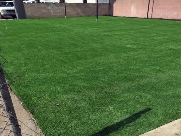 Artificial Grass Photos: Synthetic Turf Supplier Delhi, California Sports Athority