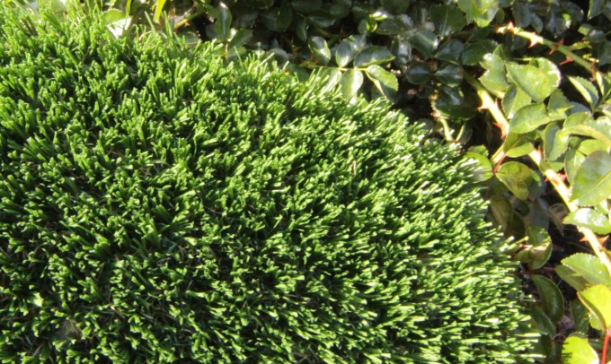 Hollow Blade-73 syntheticgrass Artificial Grass Oakland, California
